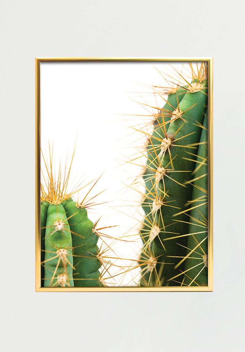 Image of   Cactus I A4
