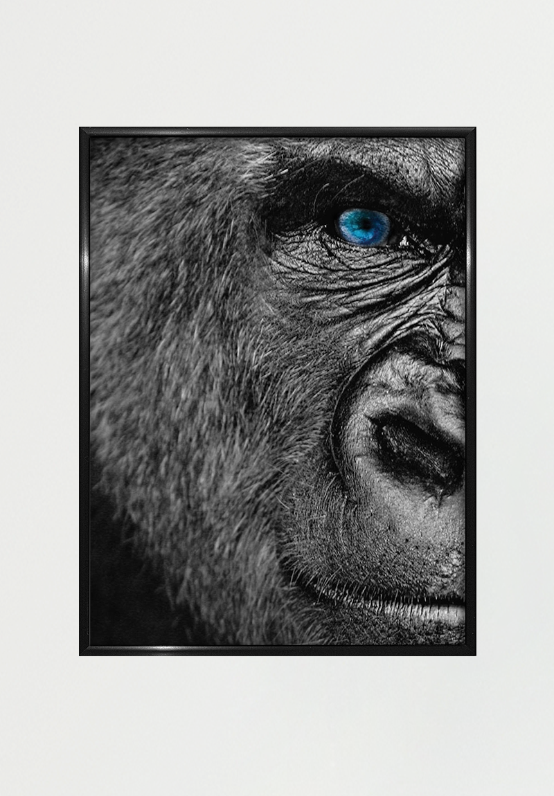 Image of   Gorilla A4